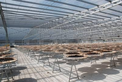 Transparent roofing project in Guangdong , 1.2mm  10000M2